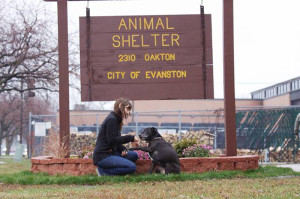 Future of Evanston shelter unclear after concern over euthanasia policies