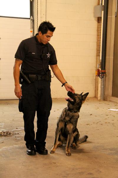 Newly appointed canine officer Anthony Sosa demonstrates training routines with his narcotics-detecting partner Rony. Sosa and the 2-year-old German shepherd spent six weeks training together.