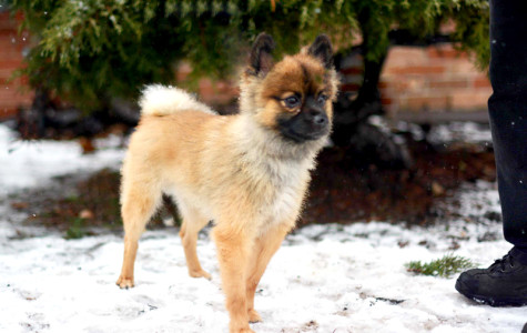 Community pressures Evanston animal shelter to decrease its dog euthanasia rate