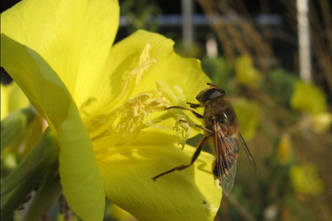 Ecology Center partners with Burt's Bees, Walgreens to help pollinators
