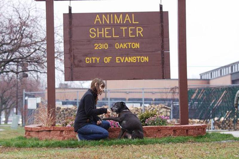 The+Community+Animal+Rescue+Effort+operates+out+of+Evanston%E2%80%99s+animal+shelter%2C+2310+Oakton+St.+The+Human+Services+Committee+will+discuss+on+Monday+the+future+of+the+nonprofit%2C+which+has+drawn+criticism+for+its+euthanasia+policies.+