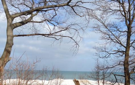 Q&A: Local artist Joyce Elias explores the colorful side of Evanston winter