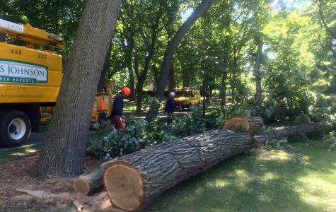 Storm topples trees, cuts power in south Evanston