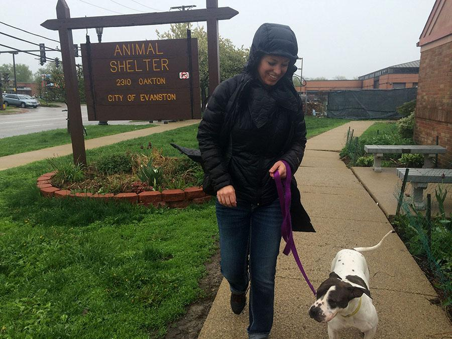 A volunteer at the Evanston Animal Shelter walks a dog around the shelter's grounds. The Evanston Animal Shelter, under the management of the Evanston Animal Shelter Association since May, will begin to establish financial independence from the city this month.