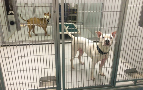 After grant to fund animal shelter employees, city must amend proposed budget