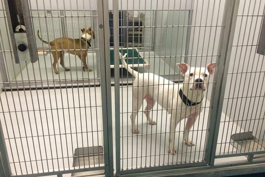 After the Evanston Animal Shelter Association received a grant funding three part-time employees to manage the shelter and kennel, city officials must alter the proposed budget released one week ago. This month, EASA established financial independence from the city to run the shelter.