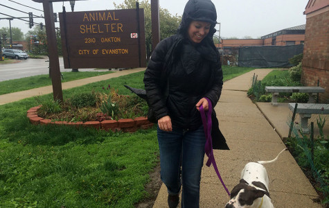 Evanston Animal Shelter gala seeks to highlight community engagement
