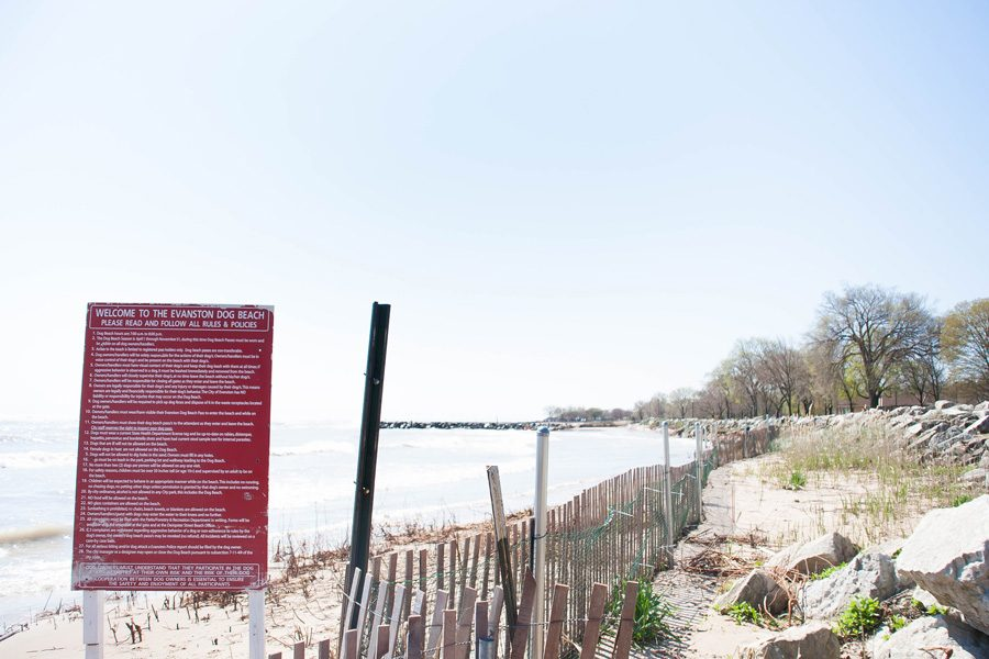 The Evanston Dog Beach is one of six Evanston beaches. Employee hours at the beaches may be reduced next summer if the state withholds funding from Evanston and other municipalities.