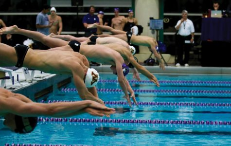 Will Hofstadter dives into the pool. The sophomore was one of Northwestern's more successful swimmers against Iowa.
