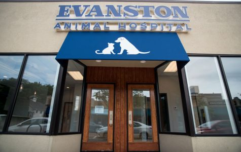 New animal hospital hopes to fill veterinarian void in south Evanston