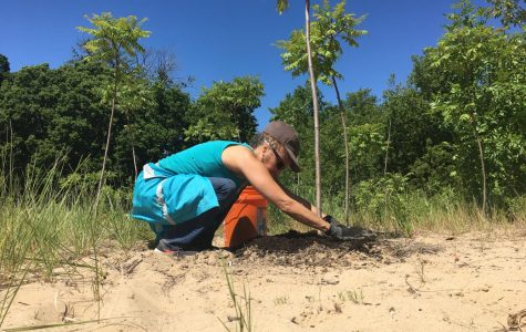 Clark Street Beach Bird Sanctuary aims to repair environmental damage