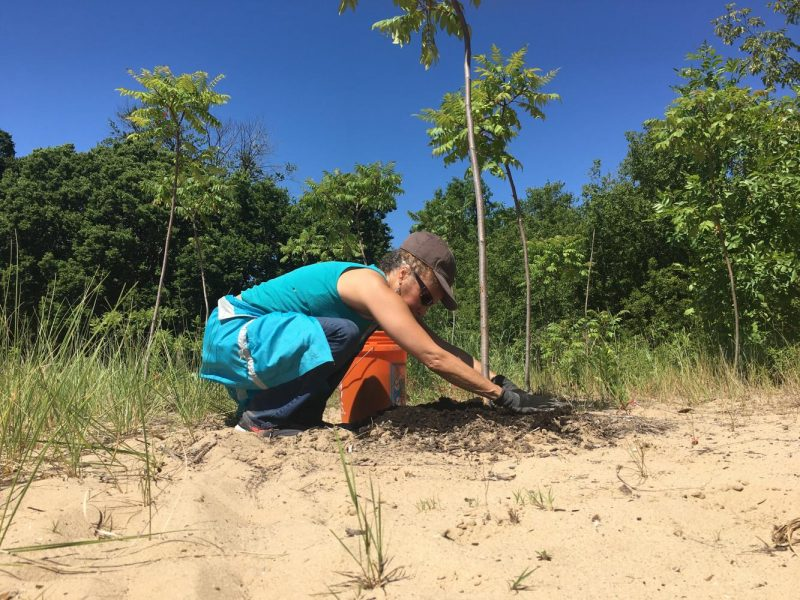 Melanie West helps during a bird sanctuary work session July 8. The Clark Street Beach Bird Sanctuary aims to attract migrating birds after an existing habitat was destroyed by the construction of the Segal Visitors Center.
