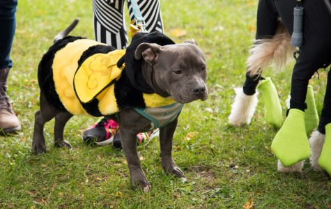 Captured: Community walks to raise awareness, funds for local animal shelter