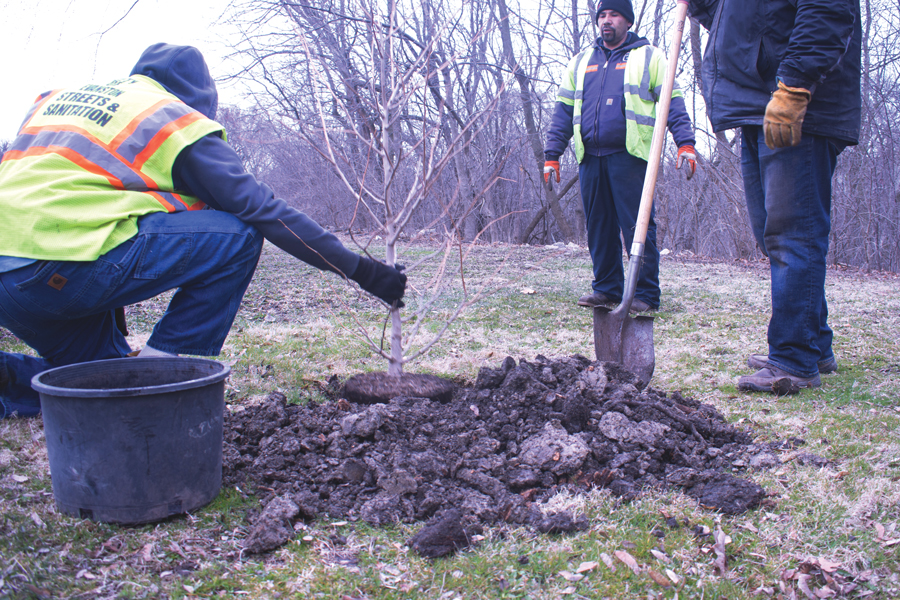 Evanston Public Works Department staff plants a tree Saturday as part of the city's annual Earth Day celebration. The Evanston Ecology Center also hosted family-friendly activities for the day.