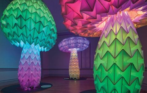 Northwestern alumnus helps program light-up mushrooms for Smithsonian art installation