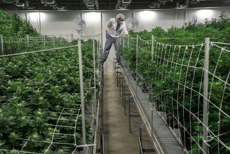 Boice: It's time to finally legalize marijuana