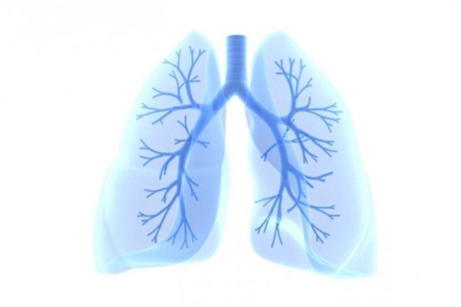 A+model+of+a+lung.+Northwestern+Medicine+and+Google%E2%80%99s+research+was+able+to+use+artificial+intelligence+to+better+identify+evidence+of+lung+cancer.