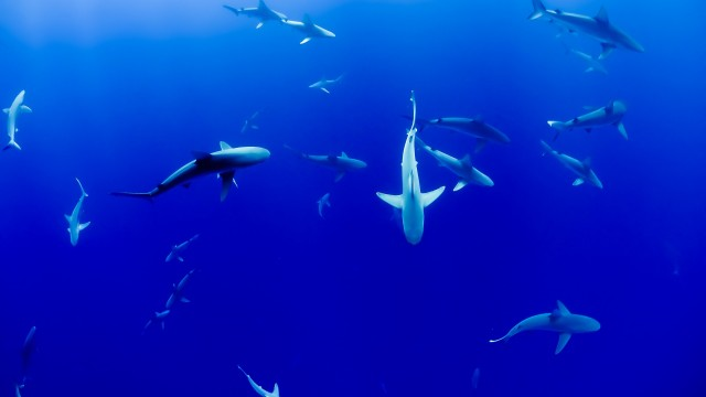 Shark spines — and their flexibility — may be able to tell us something about human bone diseases like osteoporosis.