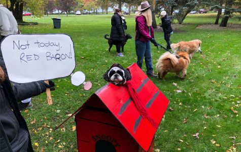 Costumed dogs raise funds for Evanston Animal Shelter at Trot for Tails Walkathon