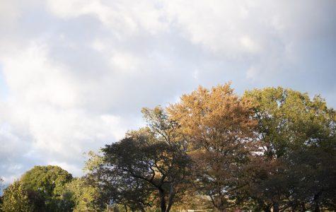 Evanston celebrates trees, certification as Community Wildlife Habitat