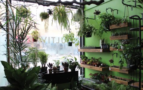 Louise Rosenberg opened Cultivate Urban Rainforest and Gallery in 2015. She fills the store tropical plants, succulents and ferns.