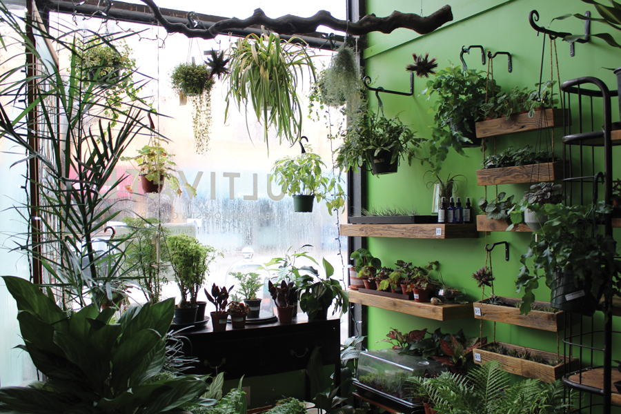 Cultivate Urban Rainforest and Gallery, owned by Louise Rosenberg, is one of many small businesses in Evanston owned by a woman.