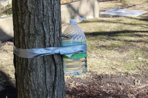 Tapping into climate change: How one professor is teaching climate change through maple syrup production