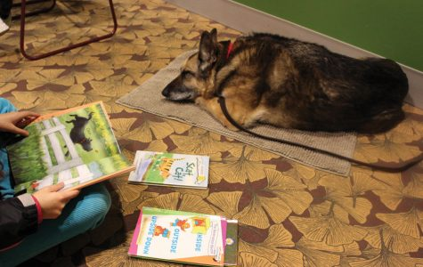 Registered therapy dog Cassidy is an 11-year-old German Shepard. She has participated in Tail Waggin' Tutors since November 2019.