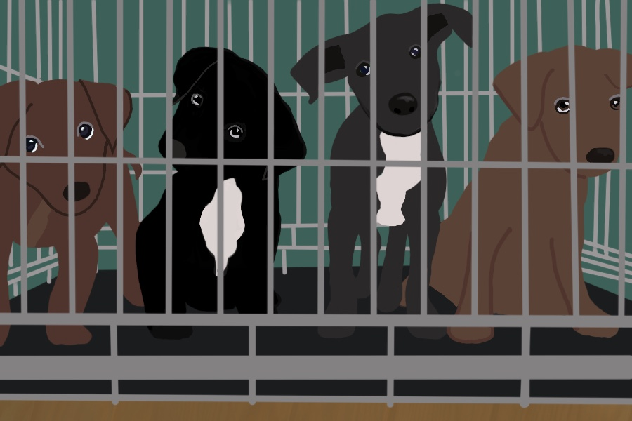 """After Gov. Pritzker issued a """"stay-at-home"""" order for the state of Illinois, many people have been looking to adopt and foster animals from Evanston Animal Shelter."""