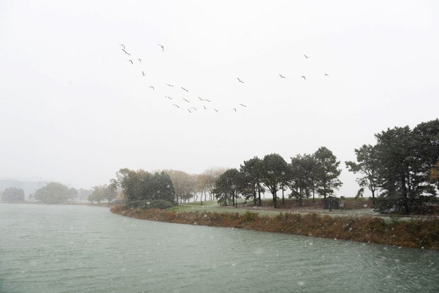 The Lakefill. Trees line the lakefront and seagulls fly above the water.