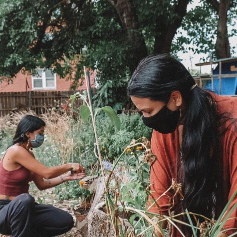 Two women wearing black masks tend to plants at a garden plot.