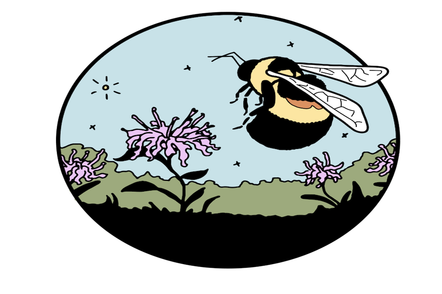 DePaul environmental masters student Libby Shafer created the Evanston Host Plant Initiative to advocate for community gardening efforts to replenish the endangered rusty patched bumble bee