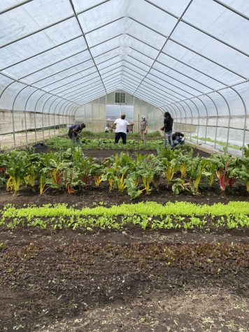 Seven gardeners talk and tend to lettuce and other greens in a hoop house.