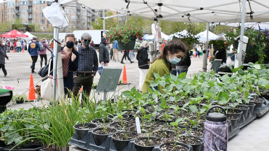 A person in a green sweater bends over behind a display of plants under a white tent. Two other people look on in the background.