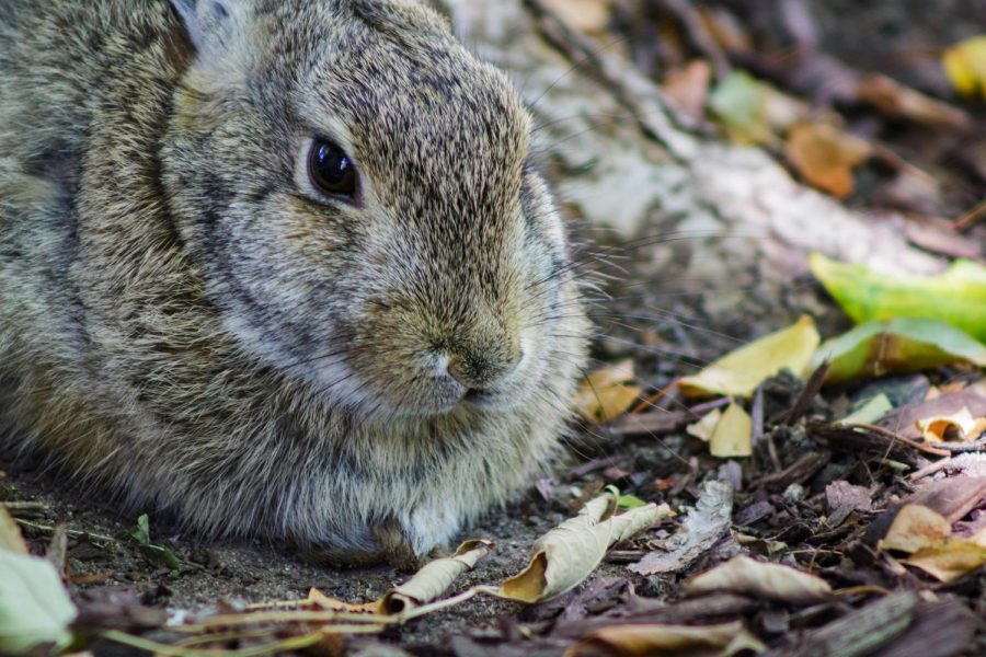 A+close+up+photo+of+a+rabbit+sitting+at+the+base+of+a+tree%2C+with+green+and+yellow+leaves+and+brown+twigs+on+the+ground.