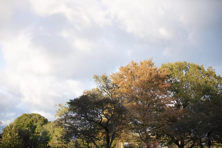 Trees+with+multicolored+leaves+against+an+autumn+skyline.