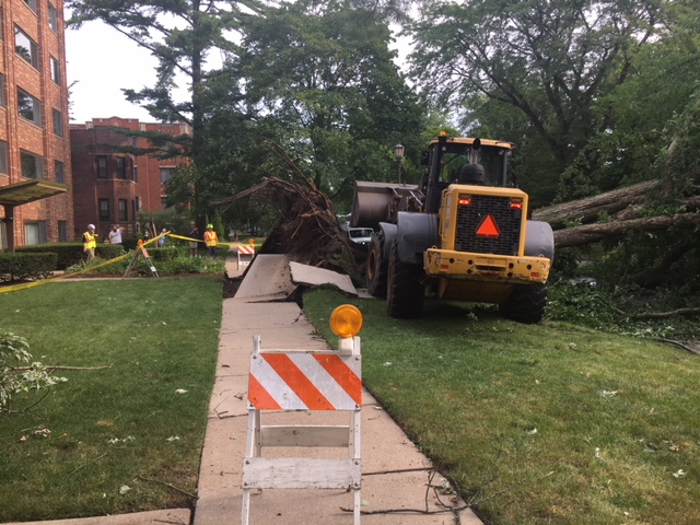 A yellow construction machine truck picks up a fallen tree, which has ripped up the sidewalk.