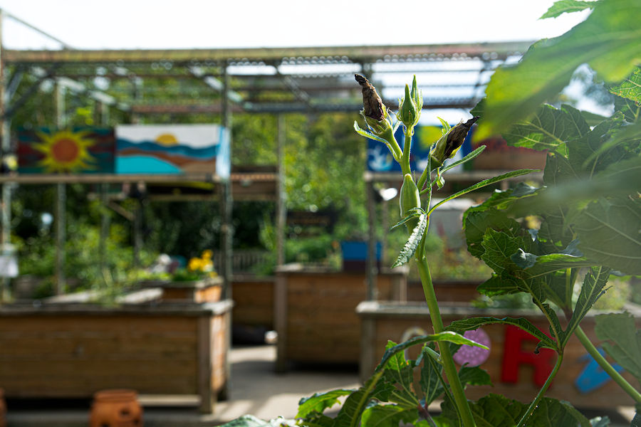 A variety of fresh produce including lettuce, yellow and green zucchini, tomatoes and rhubarb, among others, splayed out on purple, Norris University Center outdoor table.